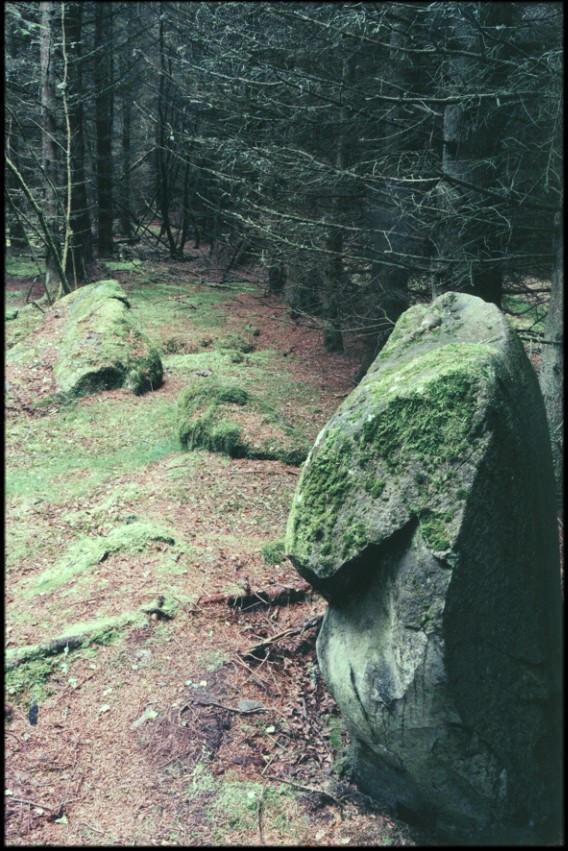 Druids Seat Wood - Ancient Scotland