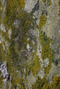 Detail of one of the cup marks.