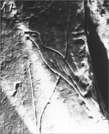 A bird is carved on the lintel of the side cell.